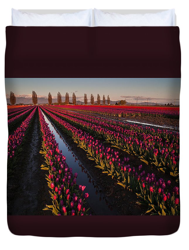 Skagit Tulip Festival Duvet Cover featuring the photograph Vibrant Dusk Tulips by Mike Reid