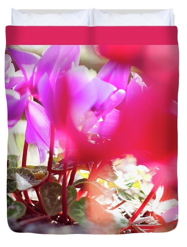 Shadow Duvet Cover featuring the photograph Vibrant Magenta Cyclamen In Bloom by Erika Pino
