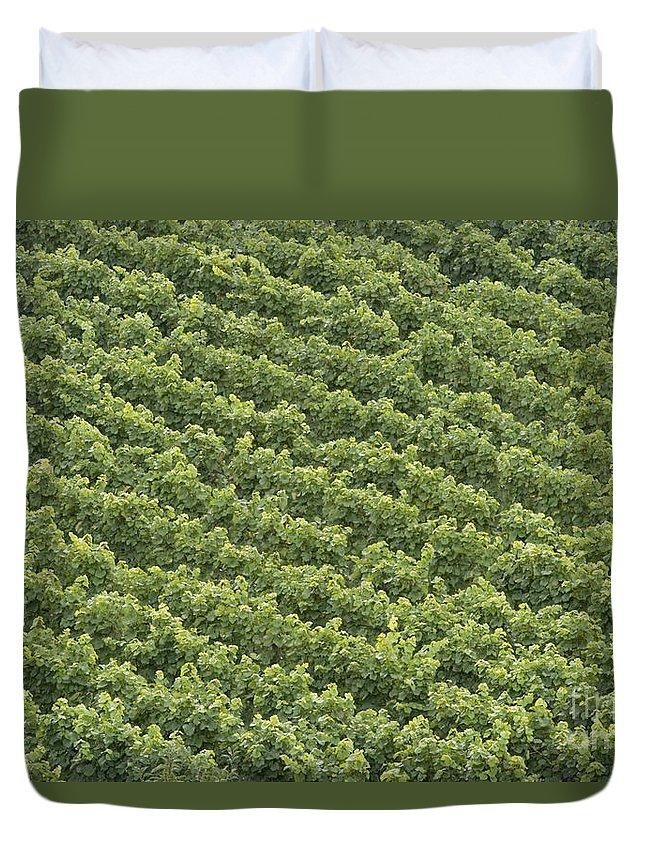 Wine Duvet Cover featuring the photograph Vinschgau Vineyard by Alex Rowbotham