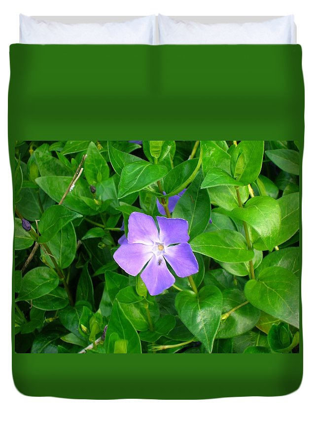 Vinca Herbacea Duvet Cover featuring the photograph Violet Herbaceous Periwinkle by Taiche Acrylic Art