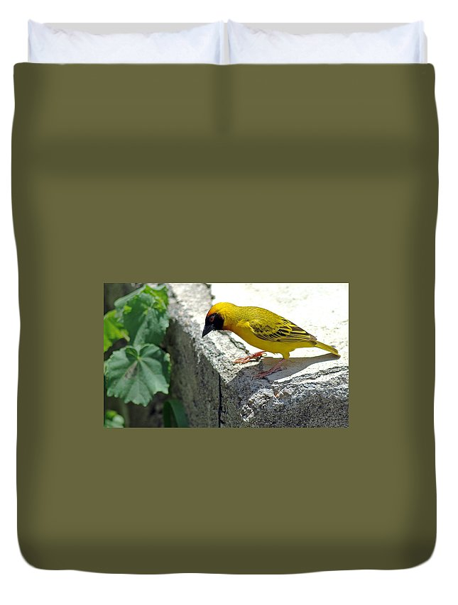 Weaver Duvet Cover featuring the photograph Vitelline Masked Weaver by Tony Murtagh