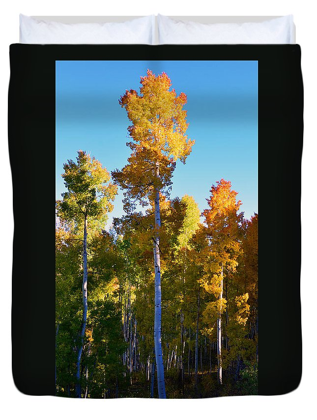 Aspen Trees Duvet Cover featuring the photograph Aspens In Vertical by David Lee Thompson