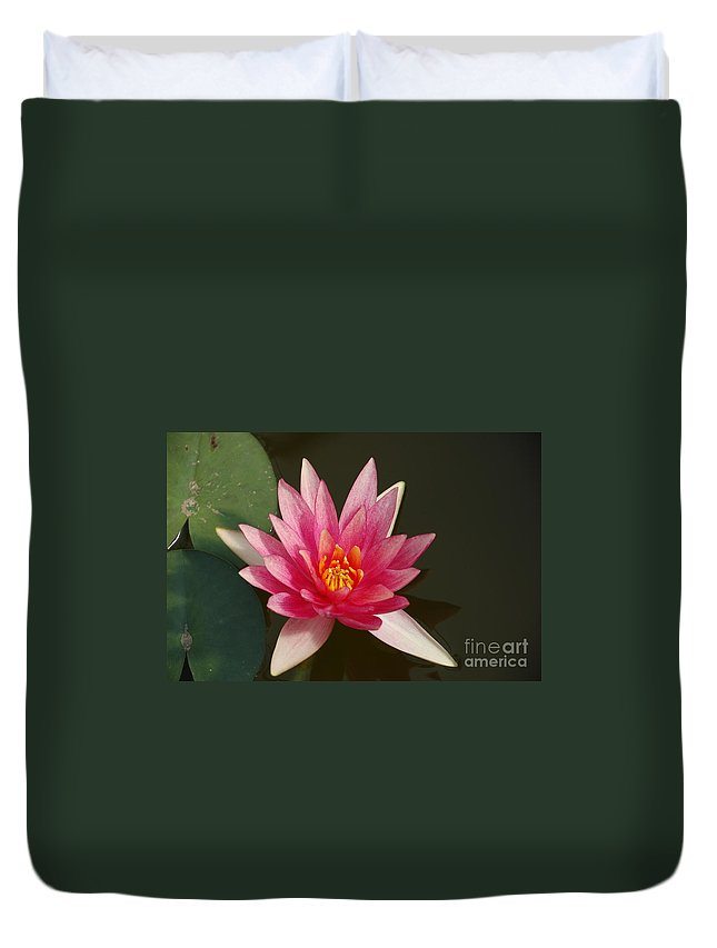 Ater Lily Duvet Cover featuring the photograph Water Lily by Randy J Heath