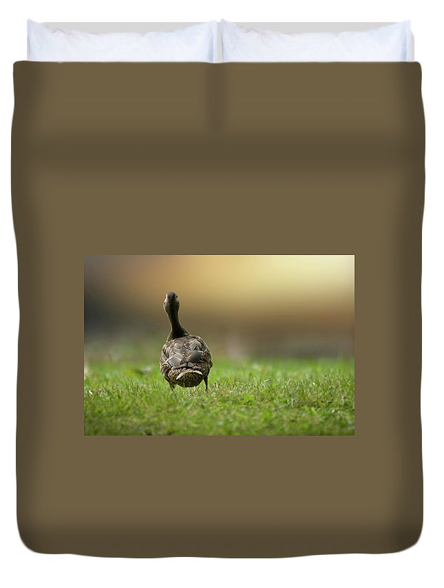 Duck Duvet Cover featuring the photograph Wait For Me by Brent L Ander