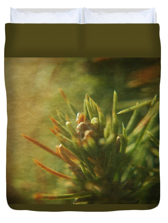 Pine Duvet Cover featuring the photograph Waiting For Spring 4 by Rhonda Barrett