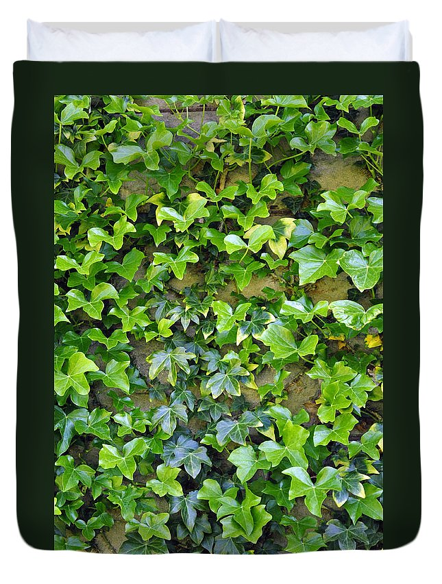 Wall Duvet Cover featuring the photograph Wall Of Ivy by Tikvah's Hope