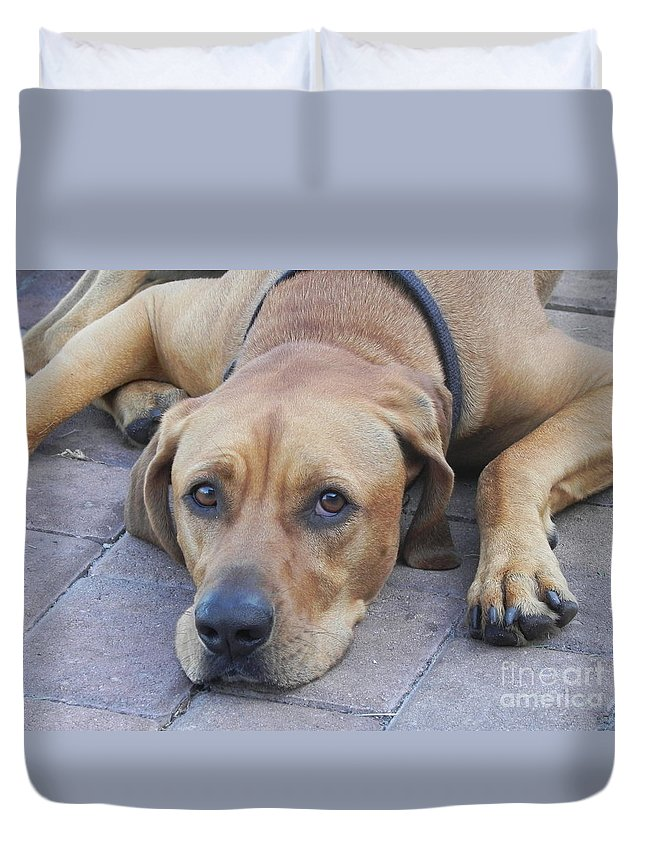 Photography Duvet Cover featuring the photograph Want To Play by Chrisann Ellis