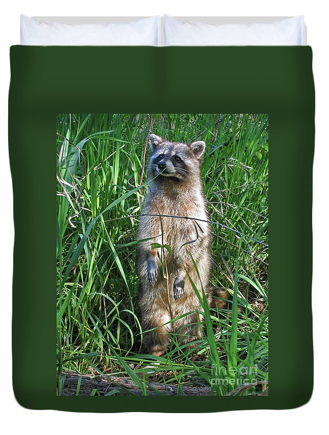 Raccoon Duvet Cover featuring the photograph Wary by Ann Horn