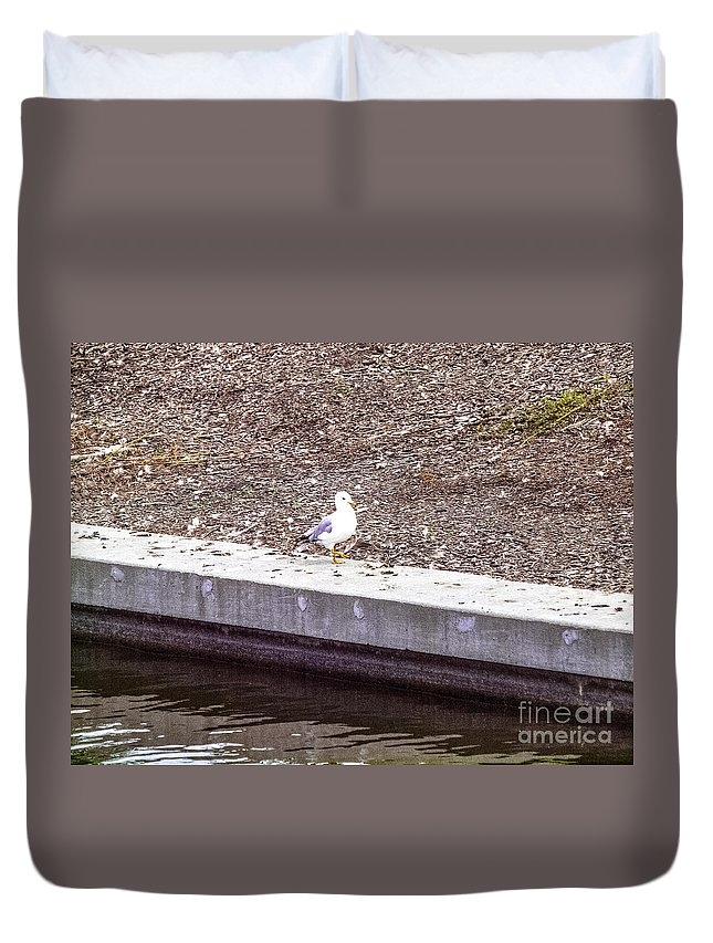 Gull Duvet Cover featuring the photograph Wascana-36 by David Fabian