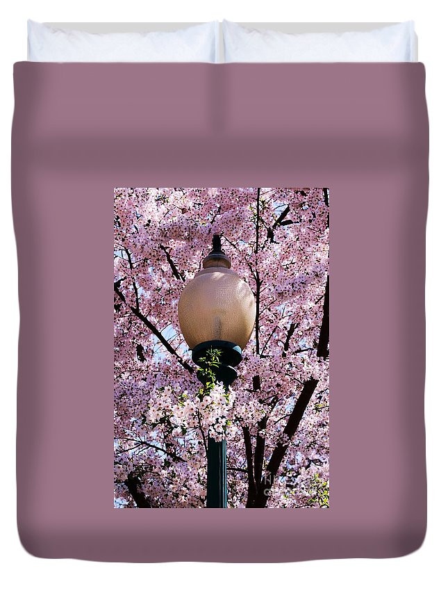 Spring Art Cherry Blossom Lanterns Tree Art Stock Shot Washington Art Travel Tourism Serene Stock Shot Pink Flowers Iconic Nature Shot Outdoors Vertical Canvas Print Metal Frame Poster Print Available On Greeting Cards Birth Announcement Greeting Cards Phone Cases Throw Pillows Duvet Covers Tote Bags T Shirts Shower Curtains And Coffee Mugs Duvet Cover featuring the photograph Washington Cherry Blossoms And A Lantern by Marcus Dagan