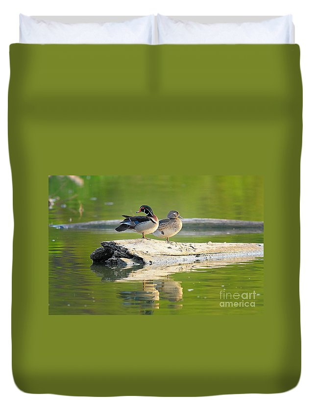 Cutts Nature Photography Duvet Cover featuring the photograph Watchful Woodducks by David Cutts