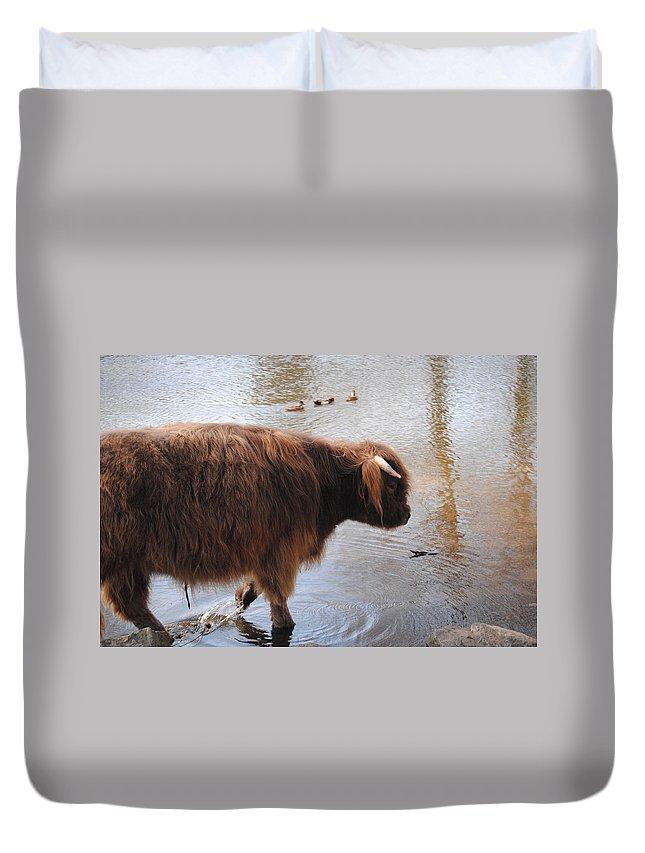 Water Buffalo Duvet Cover featuring the photograph Water Buffalo by Jon Cody