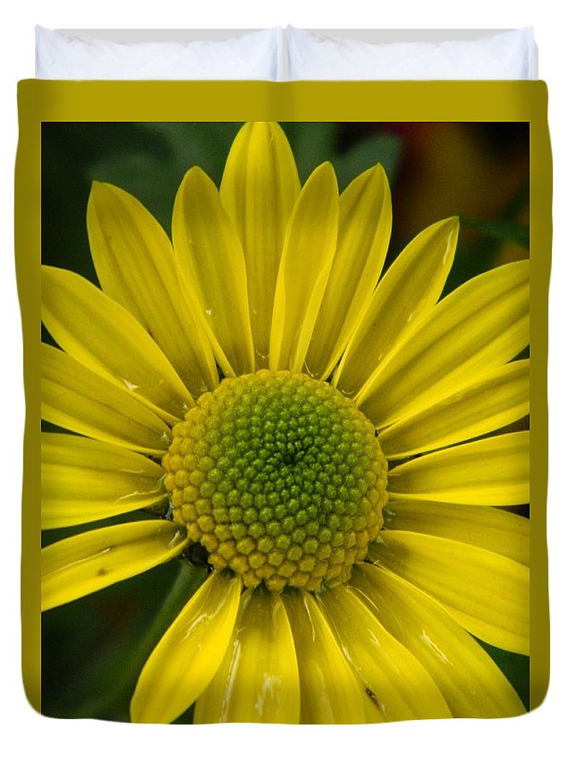 Water Duvet Cover featuring the photograph Water Kissed Yellow Chrysanthemum by Nicki Bennett