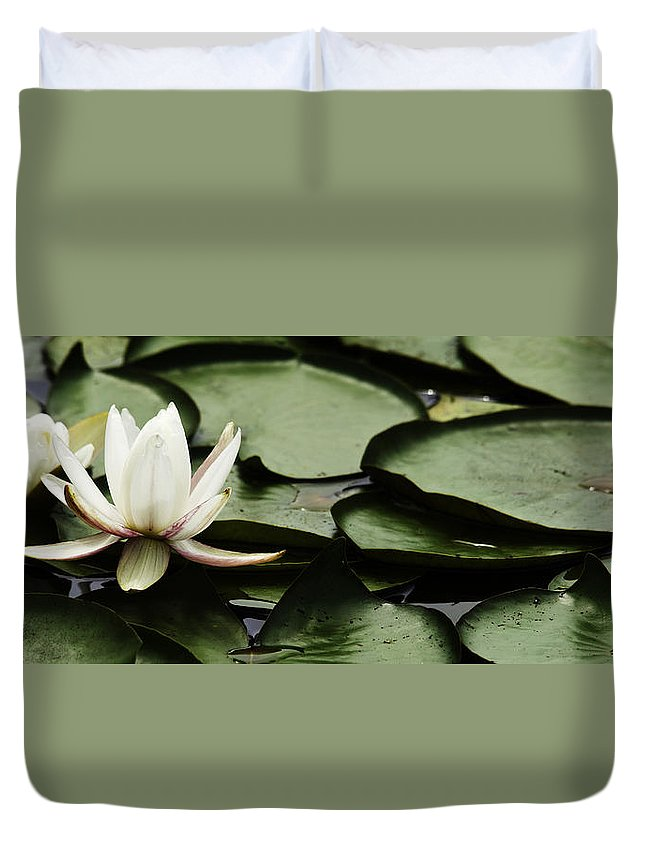 White Water Lily Pad Duvet Cover featuring the photograph Water Lily Pad by Peter v Quenter