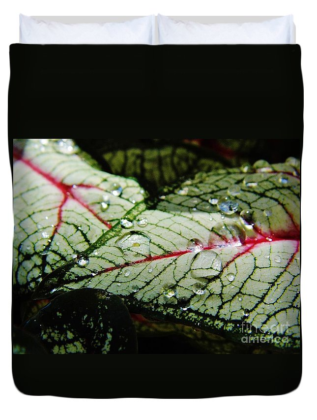 Caladium Duvet Cover featuring the photograph Water On The Leaves by D Hackett