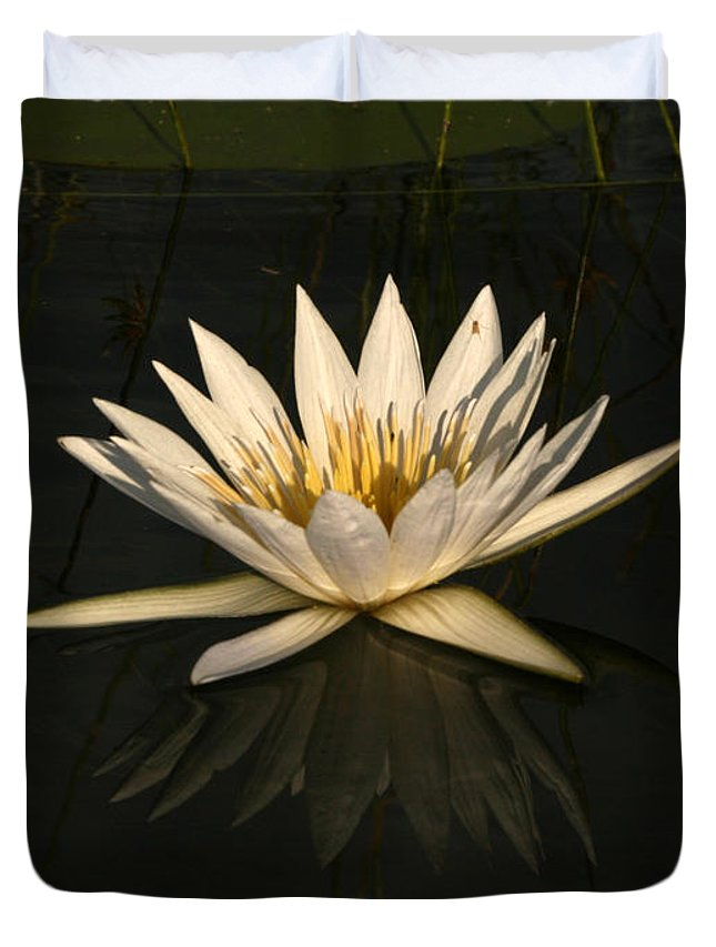Karen Zuk Rosenblatt Art And Photography Duvet Cover featuring the photograph Waterlilly 6 by Karen Zuk Rosenblatt