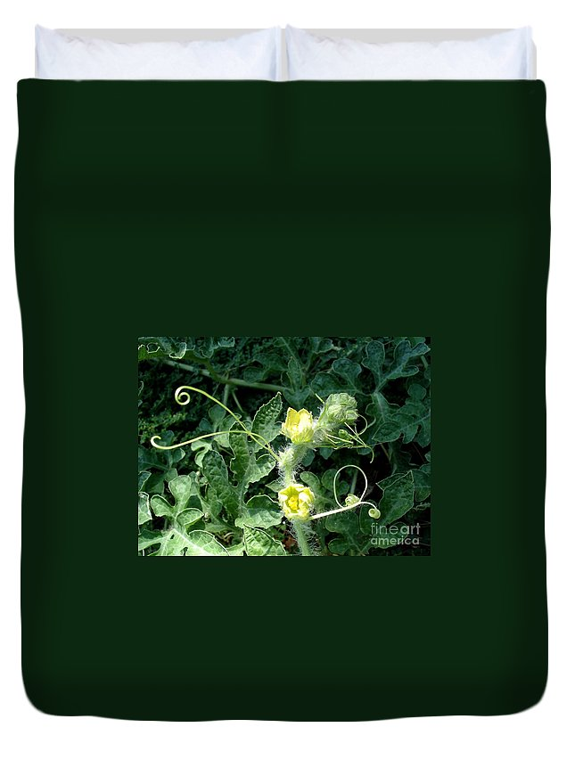 Watermelon Duvet Cover featuring the photograph Watermelon Flowers And Vine by Kerri Mortenson