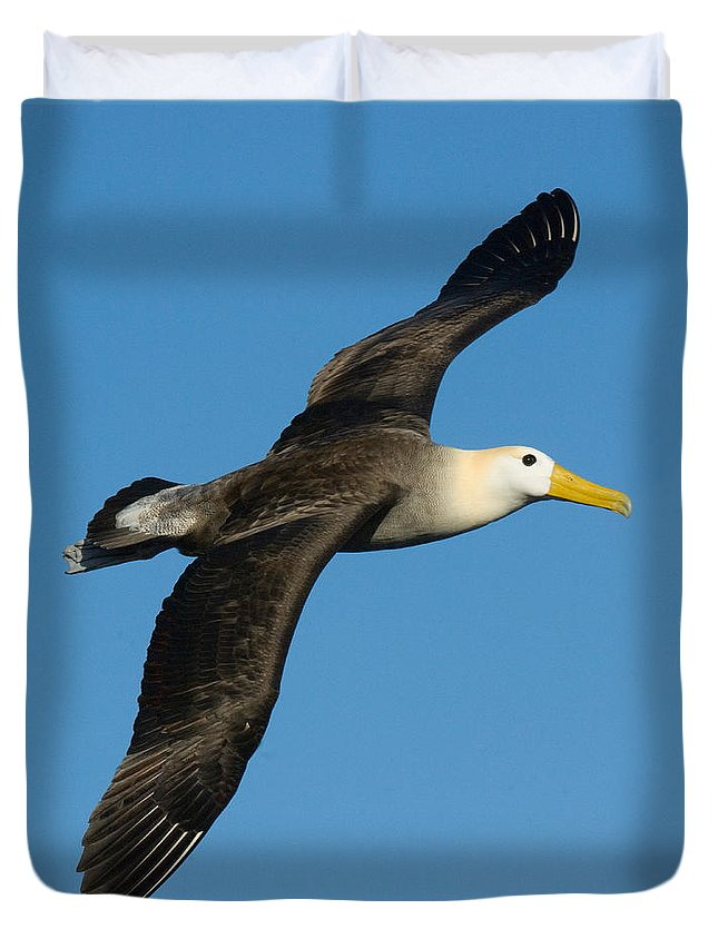 Albatross Duvet Covers