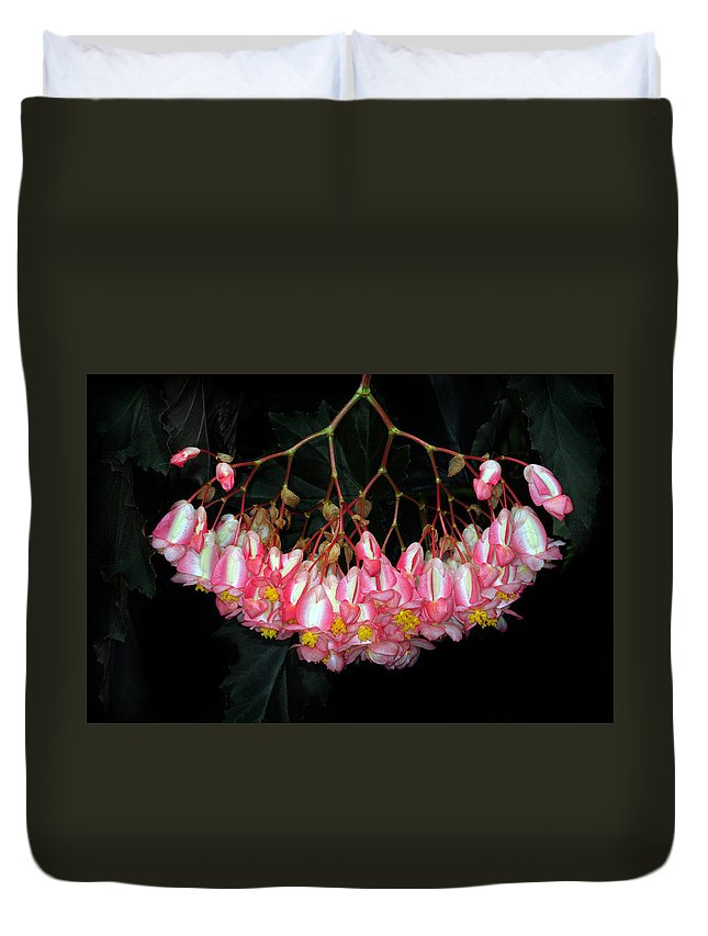 Begonia Duvet Cover featuring the photograph Wax Begonia by Dave Mills