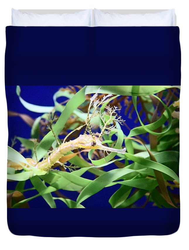 Weedy Sea Dragon Duvet Cover featuring the photograph Weedy Sea Dragon by Ellen Henneke