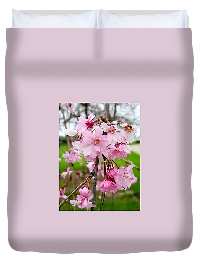 Weeping Cherry Blossoms Duvet Cover featuring the photograph Weeping Cherry Blossoms by Cynthia Woods