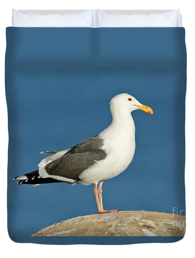 Western Gull Duvet Cover featuring the photograph Western Gull by Anthony Mercieca