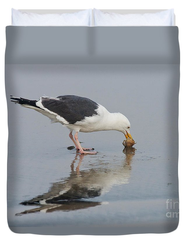 Western Gull Duvet Cover featuring the photograph Western Gull Eats Clam by Anthony Mercieca