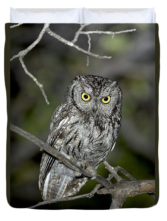 Western Screech Owl Duvet Cover featuring the photograph Western Screech Owl by Anthony Mercieca