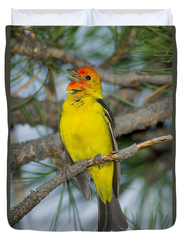 Fauna Duvet Cover featuring the photograph Western Tanager Singing by Anthony Mercieca