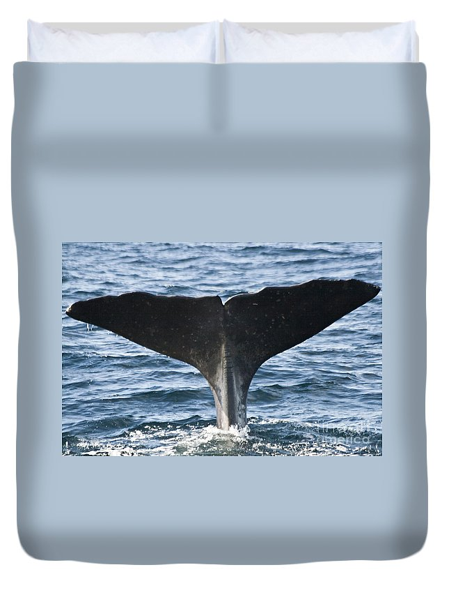 Whale Duvet Cover featuring the photograph Whale Diving by Heiko Koehrer-Wagner