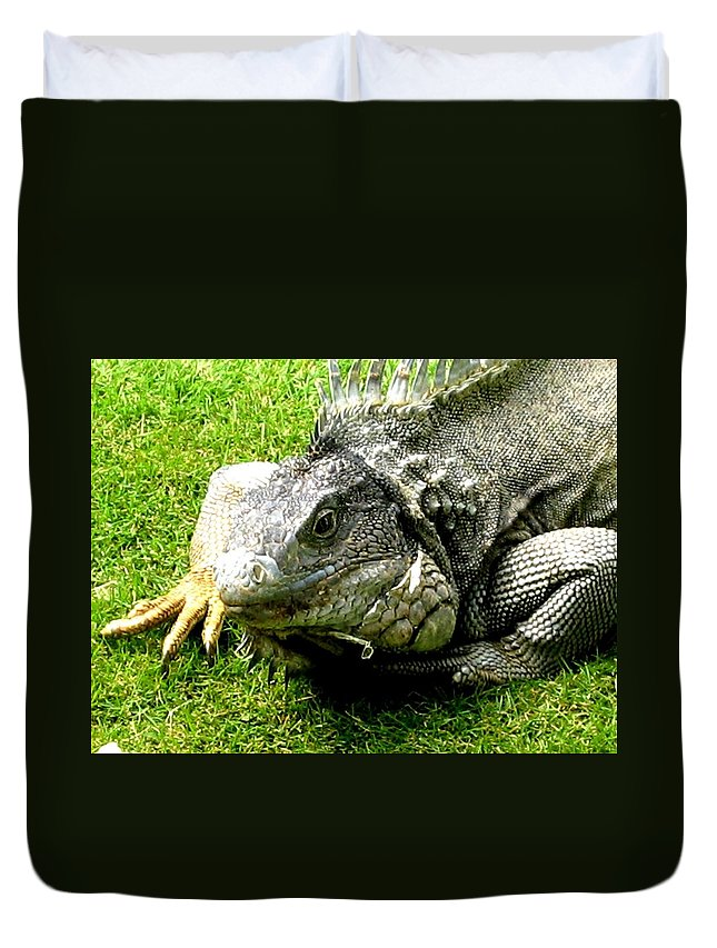 Animals Duvet Cover featuring the photograph What Are You Looking At by Jay Milo