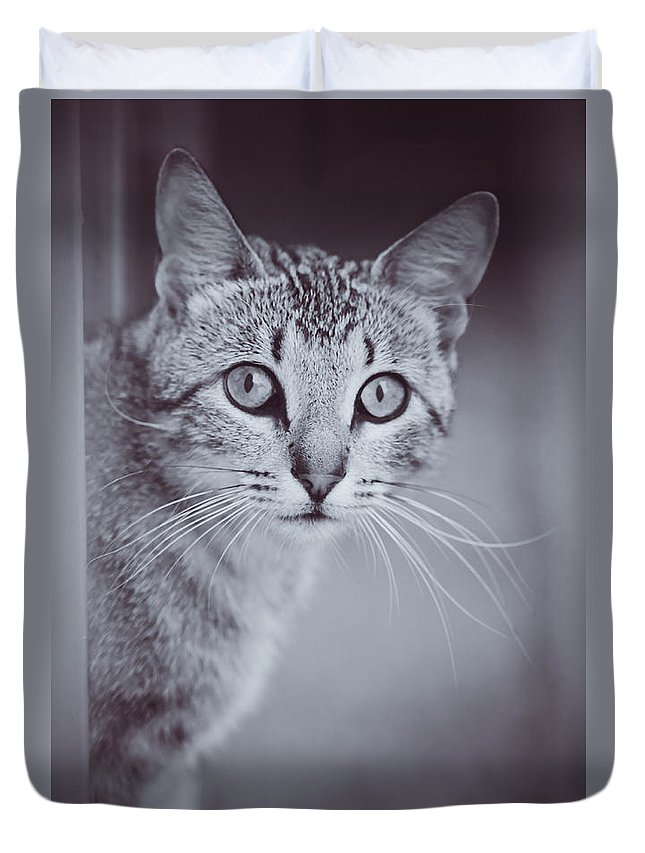 Kitty Duvet Cover featuring the photograph What Eyes You Have by Kim Henderson