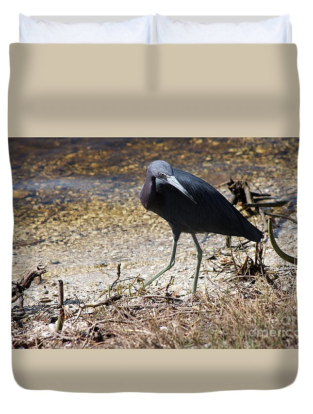 Little Blue Heron Duvet Cover featuring the photograph What Is That by Christiane Schulze Art And Photography