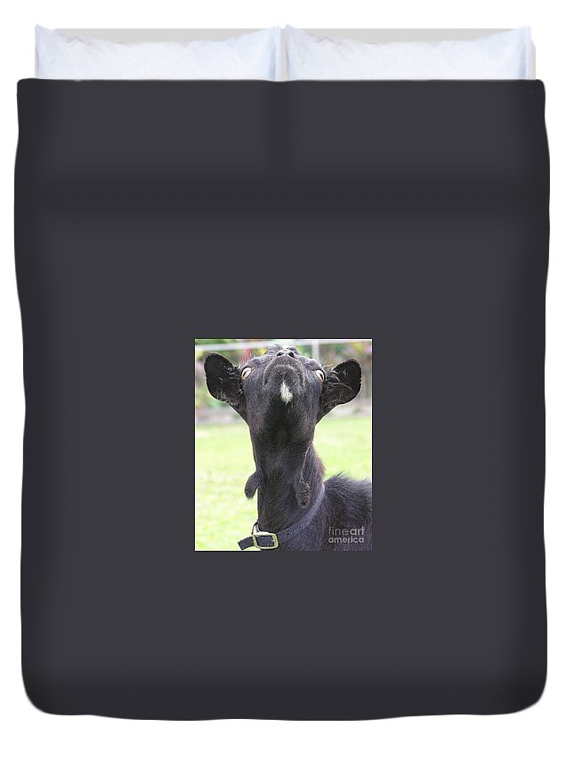 Goat Duvet Cover featuring the photograph Whats Up by Mary Deal