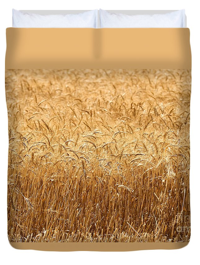 Wheat Duvet Cover featuring the photograph Wheat Field Ready For Harvest by Shay Fogelman