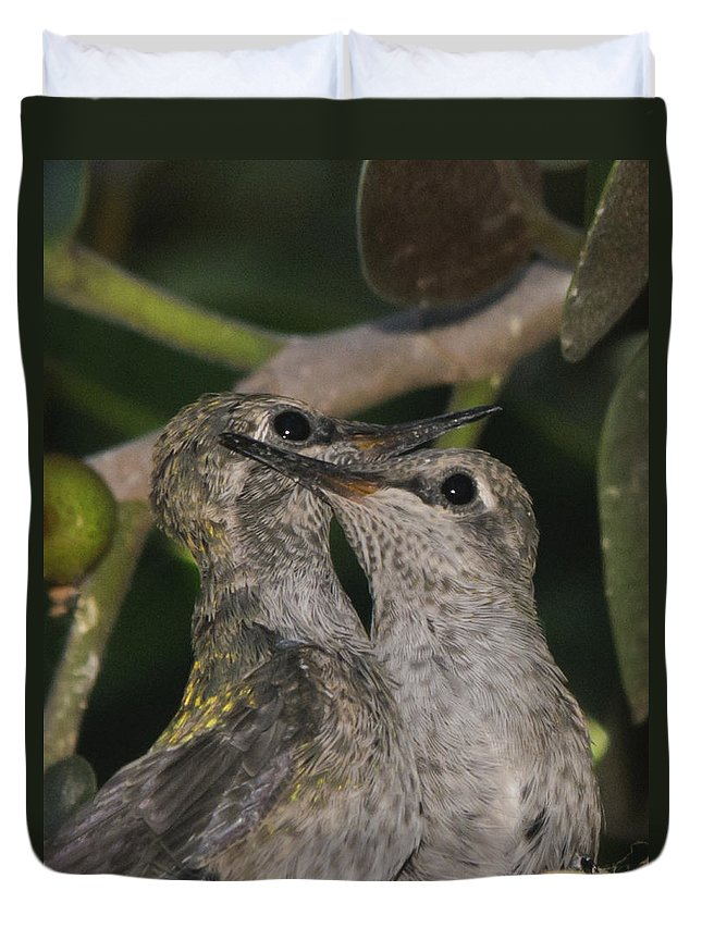 Hummingbirds Duvet Cover featuring the photograph Where Did Mom Go by Dennis Reagan