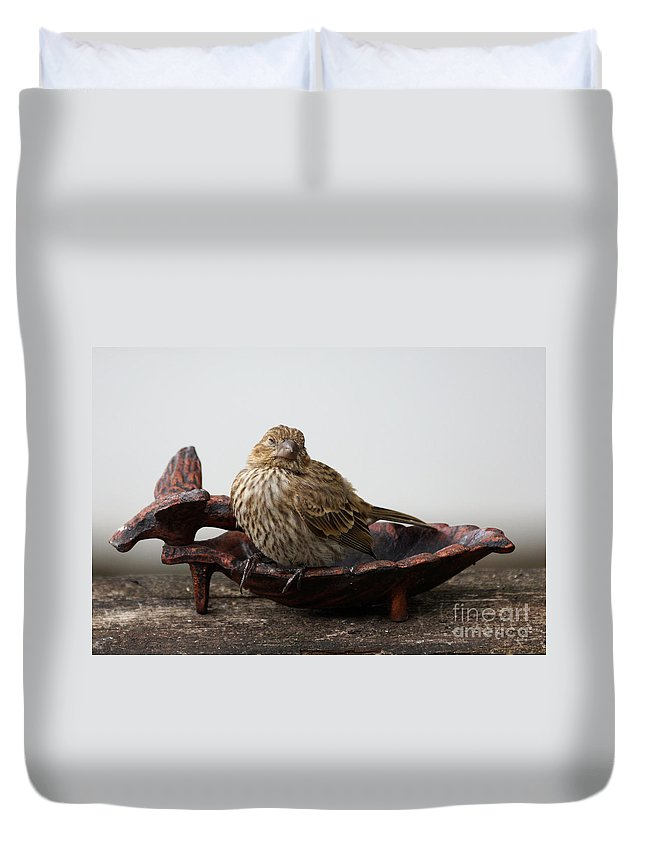House Finch Duvet Cover featuring the photograph Where Is The Food by Lori Tordsen