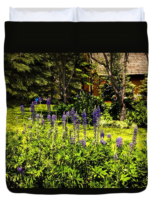 Lupines Duvet Cover featuring the photograph Where The Lupines Grow by Madeline Ellis