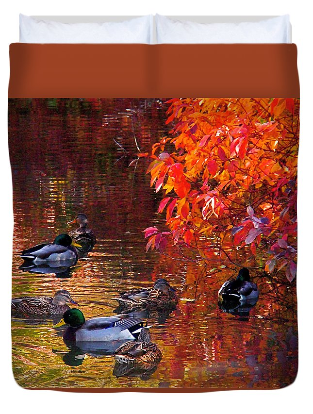 Mallards Duvet Cover featuring the photograph Which Way by Rona Black