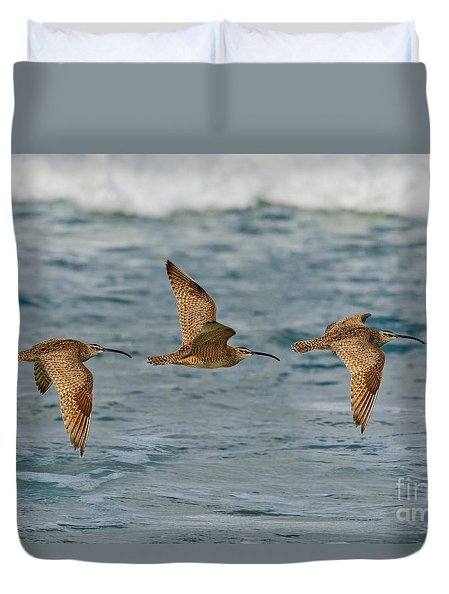 Fauna Duvet Cover featuring the photograph Whimbrel Trio In Flight by Anthony Mercieca