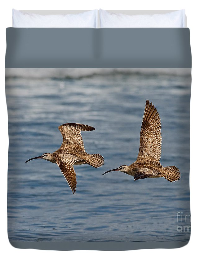 Fauna Duvet Cover featuring the photograph Whimbrels Flying Close by Anthony Mercieca