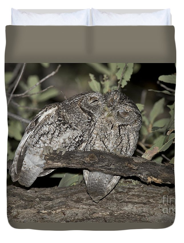 Whiskered Screech Owl Duvet Cover featuring the photograph Whiskered Screech Owls by Anthony Mercieca