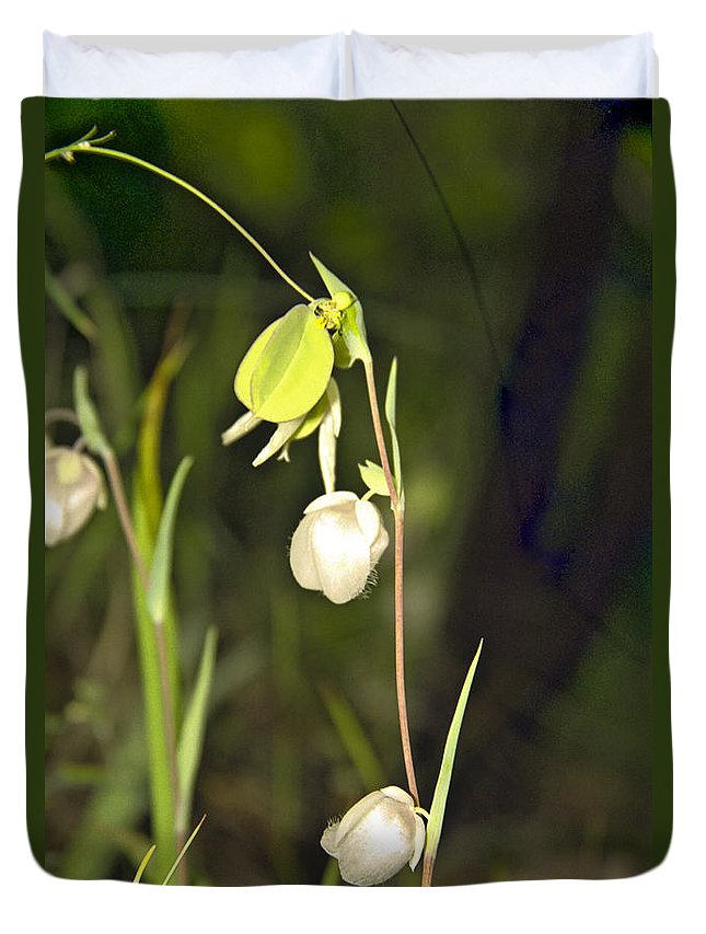Wildflowers; Globes; Nature; Green; White Duvet Cover featuring the photograph Whispers by Kathy McClure
