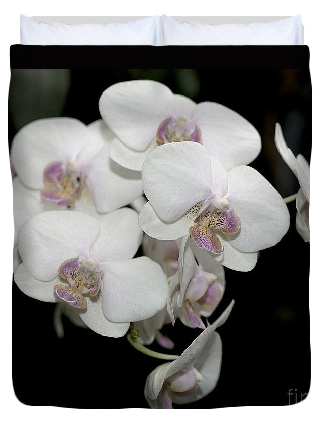 White Orchid Duvet Cover featuring the photograph White And Pale Pink Phalaenopsis  9920 by Terri Winkler