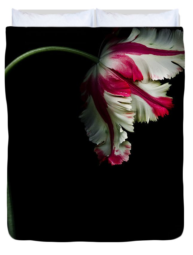 Flowers Duvet Cover featuring the photograph White and Red Parrot Tulip by Oscar Gutierrez