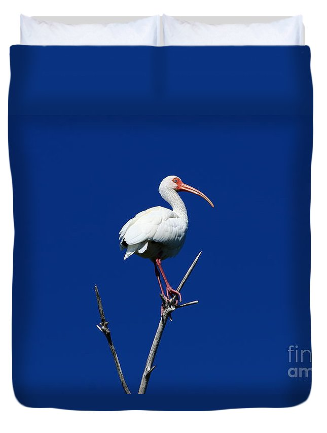 Bird Duvet Cover featuring the photograph White Beauty Against Blue by Christiane Schulze Art And Photography