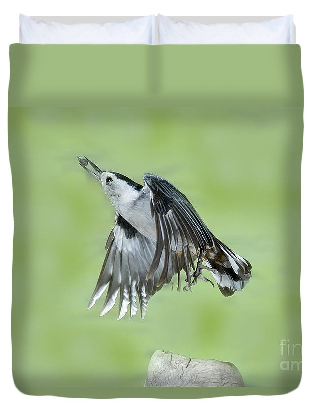 White-breasted Nuthatch Duvet Cover featuring the photograph White-breasted Nuthatch Flying With Food by Anthony Mercieca
