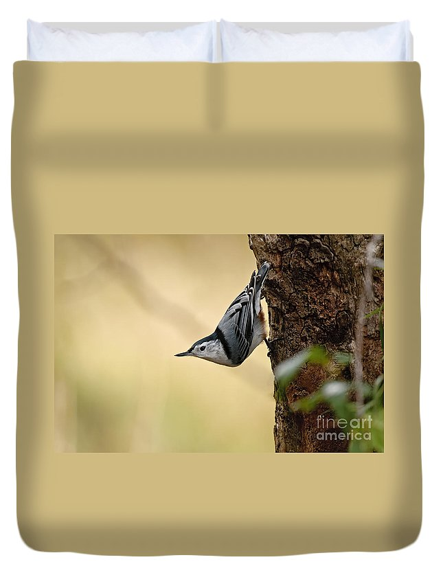 White-breasted Nuthatch Duvet Cover featuring the photograph White-breasted Nuthatch Pictures 46 by World Wildlife Photography