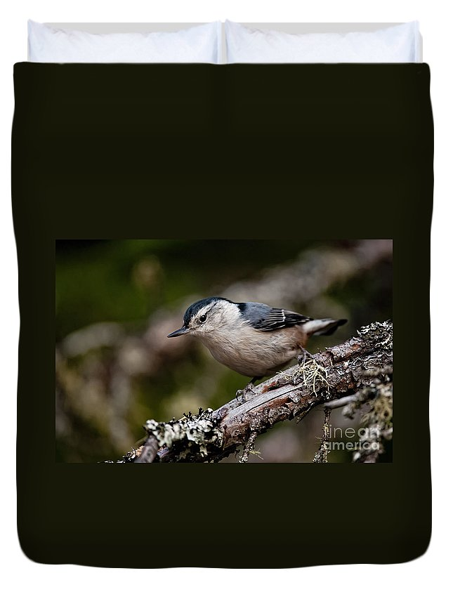 White-breasted Nuthatch Duvet Cover featuring the photograph White-breasted Nuthatch Pictures 47 by World Wildlife Photography