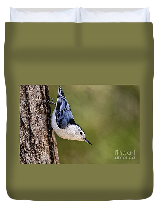 White-breasted Nuthatch Duvet Cover featuring the photograph White-breasted Nuthatch Pictures 52 by World Wildlife Photography